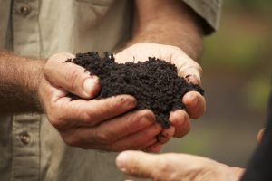 Hands holding soil